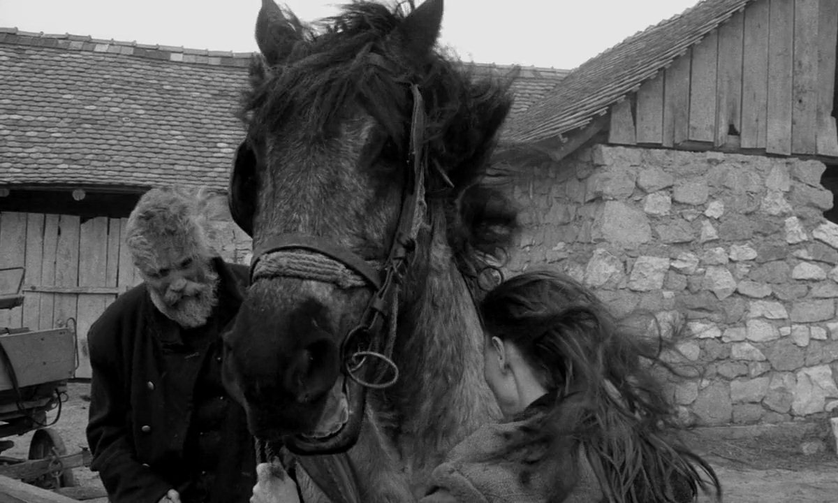 The-Turin-Horse4